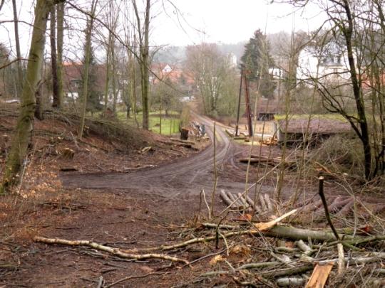 Waldzustand nahe des Klosters Walkenried
