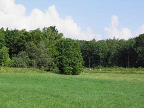 Geschichtsverein lädt zu Rundgang in Steina und Nüxeiein
