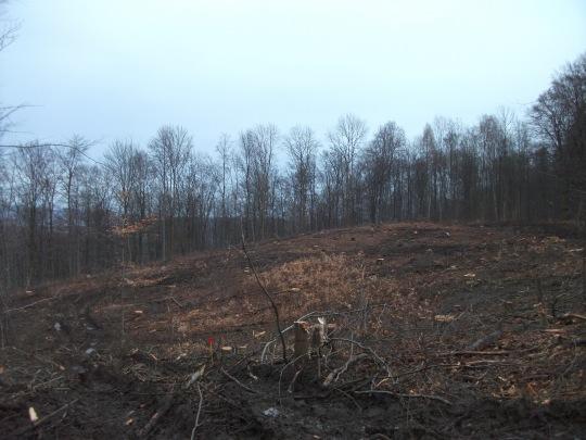 Abholzungen