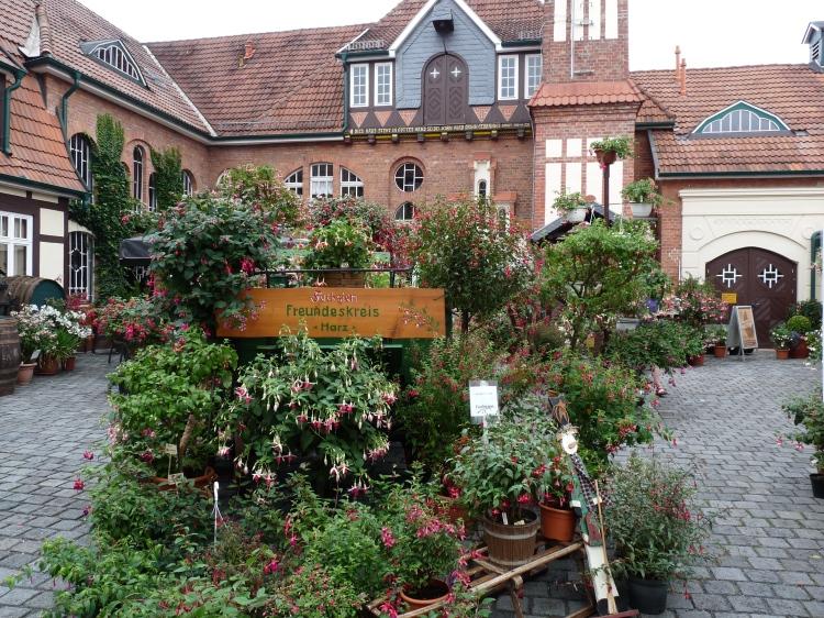 Fuchsienschau