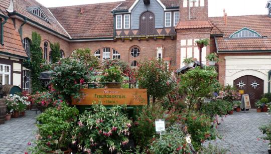 Fuchsienschau 2016